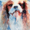 Freddie, Cavalier King Charles Spaniel - by Heather Withers
