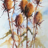 Teasels - by Heather Withers
